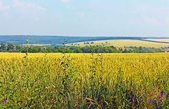 Meadows and fields in the summer Royalty Free Stock Photo