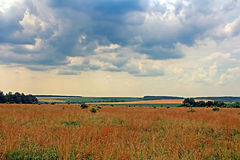 Meadows and fields in the summer Royalty Free Stock Images