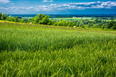Meadows and fields Royalty Free Stock Photo