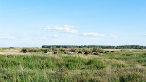 Meadows, fields and woods of central Russia. South Tyumen region. Rider on a horse. Summer. Sunny day royalty free stock photo