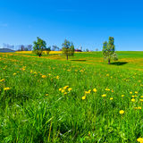 Meadows. Flowering Trees Surrounded by Sloping Meadows in Switzerland Royalty Free Stock Images