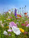 Meadows flowers and blue sky Royalty Free Stock Photos