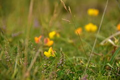 Meadows flowers. Colorful beautiful wild flowers in the meadows Near the cliffs over the ocean, wildlife, birds, water, swimming in the ocean, green grass Stock Images
