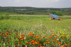 Meadows and flowers in scenic rural india. Flowery pastures, green meadows & bullock cart in west central India on the deccan plateau, near the city of Pune royalty free stock photo