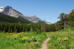 Meadows, forests and mountain Stock Image
