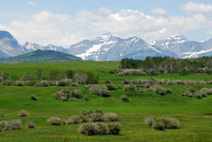 Meadows, forests and mountains. Summer view of meadows, forests and mountains in waterton lakes national park, alberta, canada Royalty Free Stock Photo