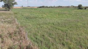 Meadows, grasses and trees in a rural area. View at the countryside. Panorama of the village, fields, meadows and trees. Lush grass and thickets stock footage