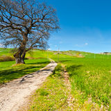 Meadows. Green Sloping Meadows of Tuscany Royalty Free Stock Photos
