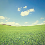 Meadows. Green Sloping Meadows of Tuscany, Instagram Effect Stock Image