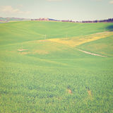 Meadows. Green Sloping Meadows of Tuscany, Instagram Effect Stock Images