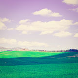 Meadows. Green Sloping Meadows of Tuscany, Instagram Effect Royalty Free Stock Photo