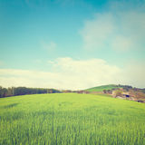 Meadows. Green Sloping Meadows of Tuscany, Instagram Effect Royalty Free Stock Photography