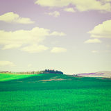 Meadows. Green Sloping Meadows of Tuscany, Instagram Effect Stock Photography