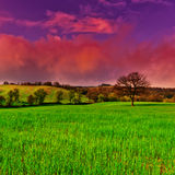 Meadows Stock Photography