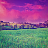 Meadows. Green Sloping Meadows of Tuscany at Sunset, Instagram Effect Stock Photo