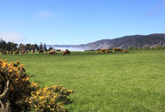 Meadows with highland's cows near Loch Ness stock photography