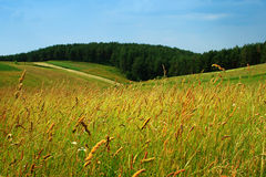 Meadows on hills royalty free stock images