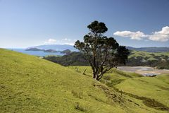 Meadows and hills on the Coromandel Peninsula Royalty Free Stock Photo