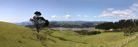 Meadows and hills on the Coromandel Peninsula Royalty Free Stock Image