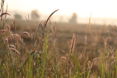 Meadows. royalty free stock images