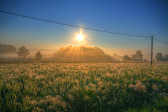 Meadows on morning with power line Royalty Free Stock Images