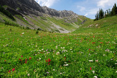 Meadows on mountain top Stock Image
