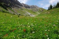 Meadows on mountain top. Summit view of mountain slopes and meadows on the top of mountain indefatigable, kananaskis country, alberta, canada stock image