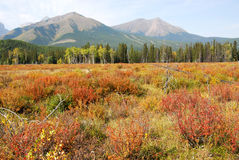 Meadows, mountains and forests Royalty Free Stock Image