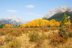Meadows, mountains and forests Stock Images