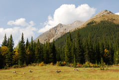 Meadows, mountains and forests Stock Photography