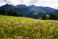 The Meadows and Mountains near Wiesensee Austria. View of the mountains surrounding the valley near Wiesensee in the Austrian Alps not far from the town of Zell royalty free stock photo