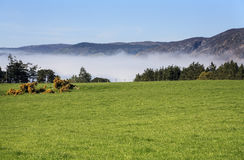 Meadows near Loch Ness, Scotland Royalty Free Stock Photo