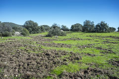 Meadows rooted by wild boars Stock Image