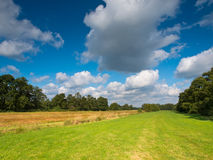 Meadows between Rows of Trees Stock Images