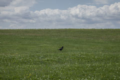 Meadows - Salisbury plain/the crow. Stock Images