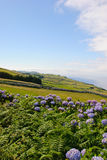 Meadows, Sao Jorge island Royalty Free Stock Photo