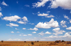 Meadows serengeti Stock Image