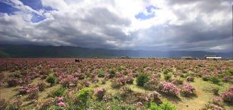 meadows shangri la Zdjęcia Stock