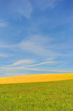 Meadows and sky. Blue sky over green and yellow meadows with some white feathery clouds Royalty Free Stock Images
