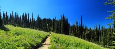 Meadows in the Sky, Mount Revelstoke National Park, British Columbia, Canada Royalty Free Stock Images