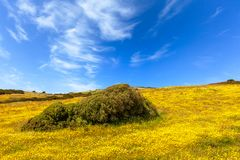 Meadows by springtime in Sardinia royalty free stock photography