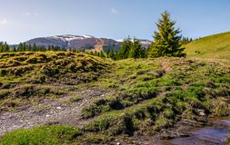 Meadows and spruce forest on hills. Beautiful springtime landscape in mountains Royalty Free Stock Photography