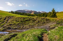 Meadows and spruce forest on hills. Beautiful springtime landscape in mountains Royalty Free Stock Photo