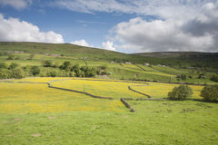 Meadows and stone walls, Swaledale. Stone walls and meadows, Swaledale, Yorkshire Dales National Park Royalty Free Stock Images