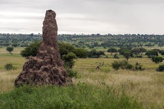 Meadows with stones. Meadows of Tanzania with stones on a cloudy day Royalty Free Stock Photo