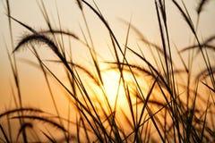 Meadows. On sunrise background Royalty Free Stock Image