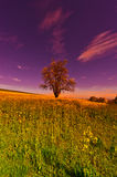Meadows at Sunrise Royalty Free Stock Images