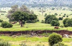 Meadows of Tanzania Stock Photos