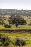 Meadows of Tanzania Royalty Free Stock Photo