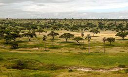 Meadows of Tanzania. With acacias and palm trees on a cloudy day stock images